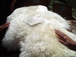 Sheepskin Wikipedia