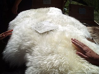 Sheepskin leather with wool attached