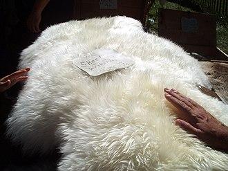 Sheepskin - A whole sheepskin