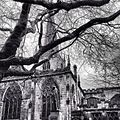 Sheffield Cathedral Beyond the Branches.jpg
