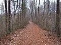 Shenipsit Trail (3), December 2018.JPG