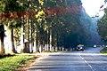 Shillong to Cherrapunji (5905748490).jpg