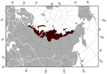 Siberian Brown Lemming Lemmus sibiricus distribution map.png