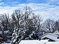 Silver Spring Snow 04.jpg