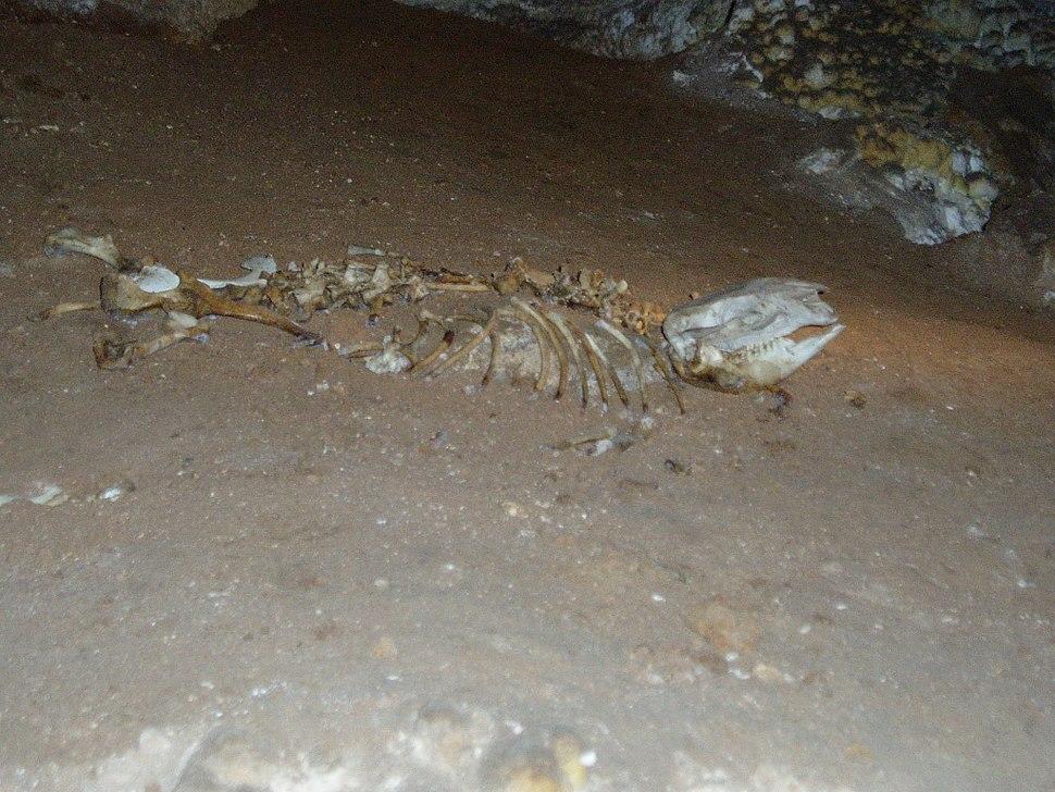 Skeleton in cave