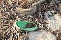 Slippers on the beach of Bantayan 23.jpg