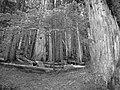 Small young tree among giants (Custom) (2913616898).jpg