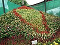 Snap from Lalbagh Flower Show Aug 2013 8579.JPG