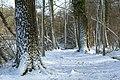 Sneeuw in Meerdaalbos - 372695 - onroerenderfgoed.jpg