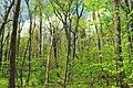 Soft Green (2) (14023634737).jpg
