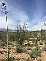 Sonoran Desert1.jpg