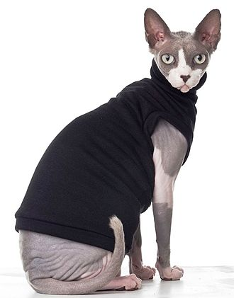 Sphynx cat - A Sphynx cat wearing commercially available clothes