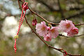 Spring in London (6973553824).jpg