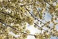 Spring in London (6973593288).jpg