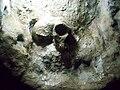 St. Michael's Cave Neanderthal Skull Replica.jpg