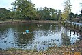 Stanmore, Spring Pond, Little Common - geograph.org.uk - 85312.jpg