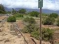 Starr-040613-0025-Solanum americanum-habit-Kanaha Beach-Maui (24085089933).jpg