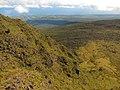 Starr-121015-0711-Pinus radiata-invading steep slopes-Halemauu Trail HNP-Maui (24825291589).jpg
