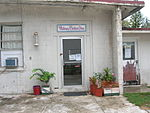 Pandanus amaryllis (potted plants). Location: Midway Atoll, Barber shop by All Hands Club Sand Island