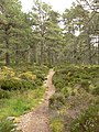 Start of the Lairig Ghru - geograph.org.uk - 578098.jpg