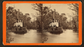 Steamer 'Marion' on the Oklawaha River, Fla, from Robert N. Dennis collection of stereoscopic views.png