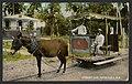 Street Car, Mayagüez, PR (1913).jpg