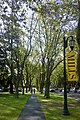 Students walk along tree-lined Richards Road near the entrance to Mills College.jpg