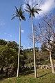 Sueyoshi Park Naha Okinawa Japan03s3.jpg