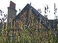 Sunny Grass (7446369000).jpg