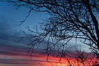 Sunset with tree 3.jpg