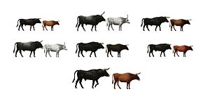 Tauros Programme - Main breeds used in TaurOs Project. Upper row from left to right: Limia, Maremmana primitivo, Maronesa. Lower row: Podolica, Sayaguesa, Pajuna. Down below, the phenotypic and ecologic breeding target, the Aurochs.