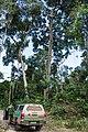Terra Indígena Cachoeira Seca, Pará (40326430474).jpg