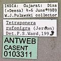 Tetraponera rufonigra casent0103311 label 1.jpg