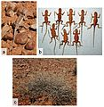 The-Role-of-Integrative-Taxonomy-in-the-Conservation-Management-of-Cryptic-Species-The-Taxonomic-pone.0101847.g010.jpg