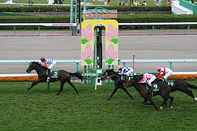 The 44th Sapporo 2sai Stakes 20090905.JPG