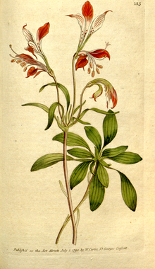 The Botanical Magazine, Plate 125 (Volume 4, 1791).png