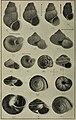 The Conchologists' exchange (1913) (20491188510).jpg