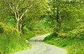 The Fedney Road near Waringsford - geograph.org.uk - 814443.jpg