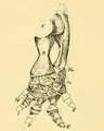 The Osteology of the Reptiles-186 ijhb juh jhg.png