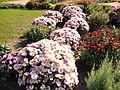 The TNU Botanical Garden in Simferopol, Crimea, Ukraine 06.JPG