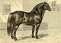 The breeds of live stock, and the principles of heredity (1887) (14594566758).jpg