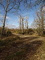 The edge of the claypits - geograph.org.uk - 1173118.jpg