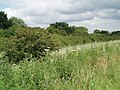 The hedgerow alongside the A18 - geograph.org.uk - 486023.jpg