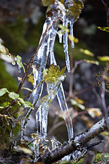 The icicles (1).jpg