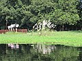 The pond at Sonargaon 03.jpg
