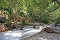 The river (184990602).jpg