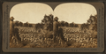 The shepherd and his flock, sheep industry, Montana, U.S.A, by Keystone View Company.png