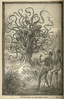 Depiction of a native being consumed by a Ya-te-veo (I see you) carnivorous tree of Central America, from Land and Sea by J.W. Buel, 1887.