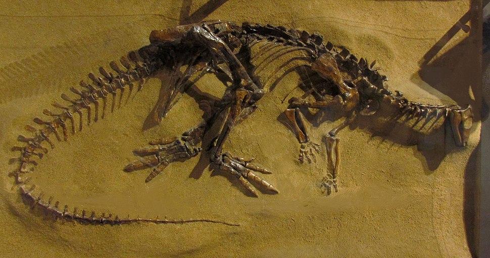 Thescelosaurus neglectus, CMN