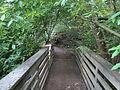 Tilden botanical garden 9.JPG